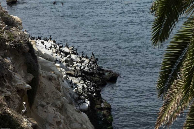 La Jolla Cove. Тихий океан