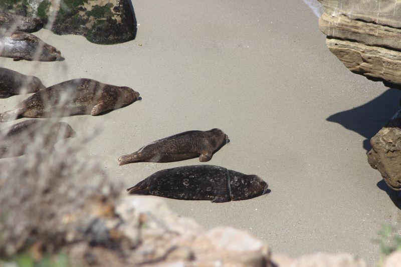 Ползущие тюленята (seals)