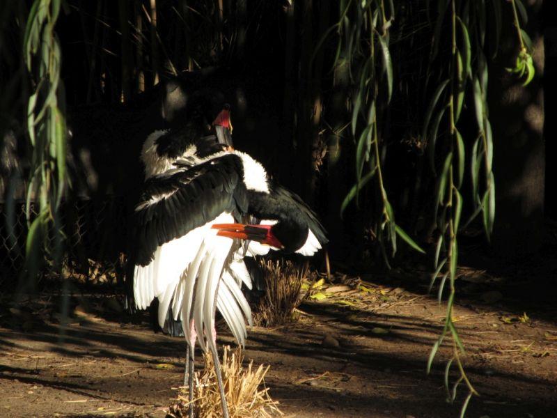 Станные птицы с цветными клювами