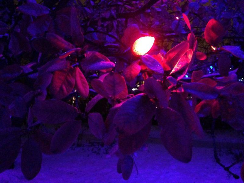 Denver. Blossoms of Light