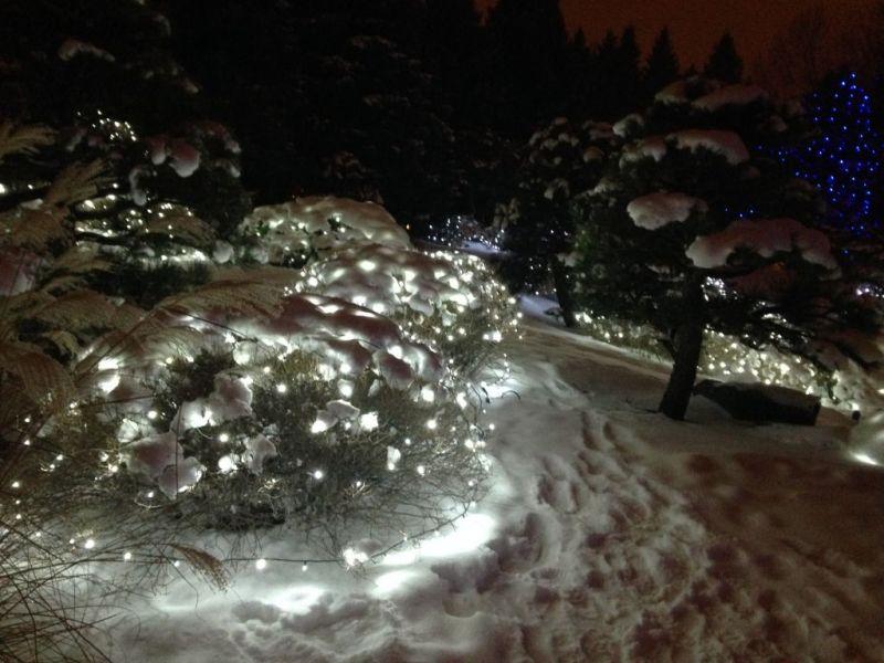 Denver Blossoms of Light