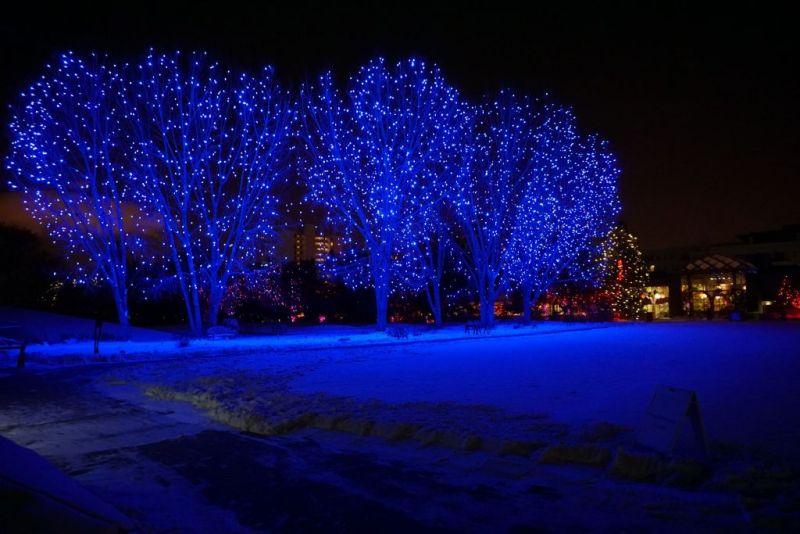 Денверский ботанический сад. Blossoms of light